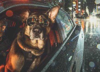 Unidad canina de la policía creó un increíble calendario para el año 2019