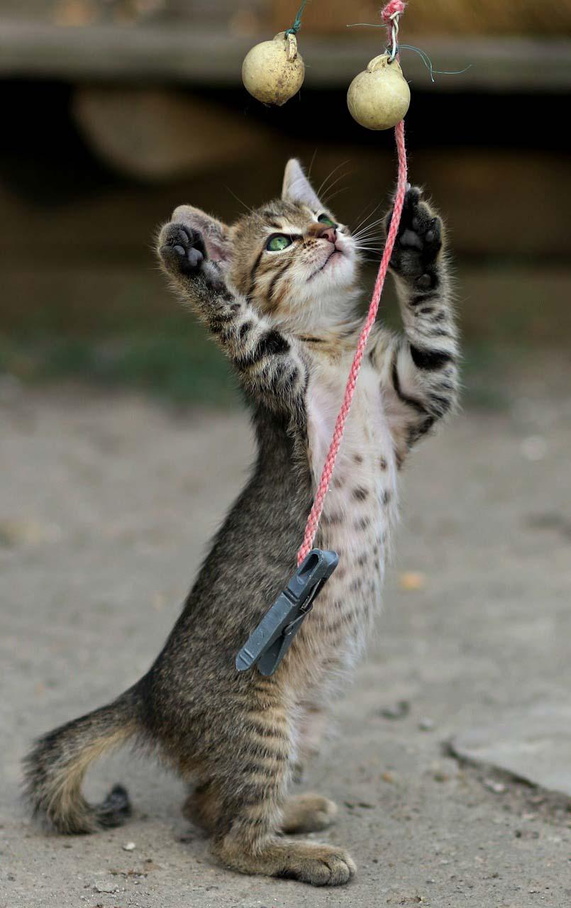 Jugar con tu felino crea un lazo de confianza