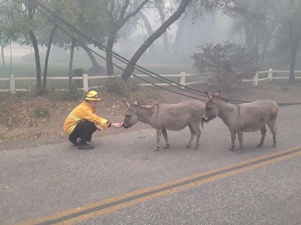 Bomberos rescatan dos burros