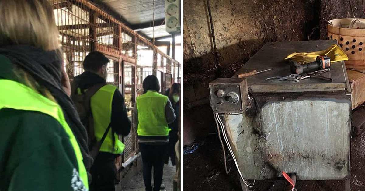 Corea del sur cierra su mayor matadero de carne de perro