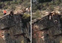 Docena de perros caen por un peñasco por culpa de un cazador