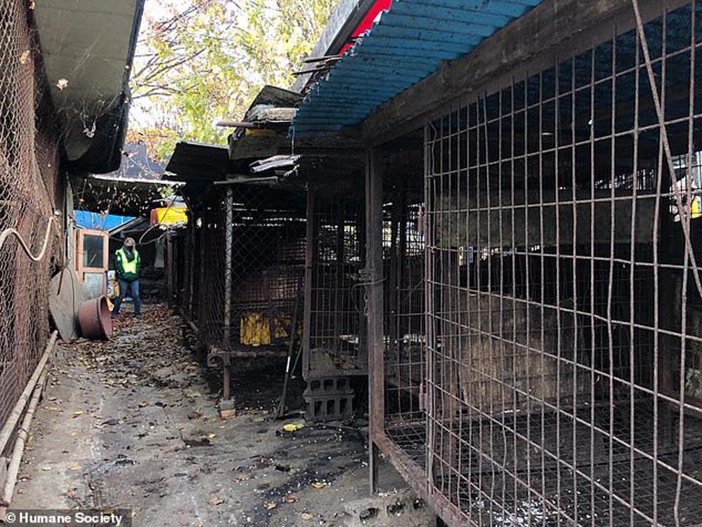 El mayor matadero de carne de perro en Corea del Sur
