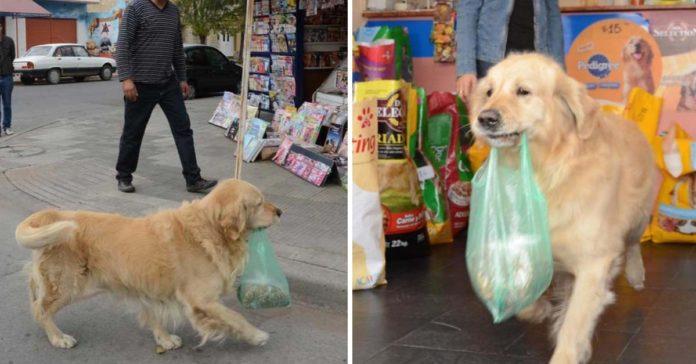 Falleció Buddy, el perrito que compraba su propia comida