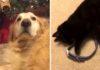 Gatito encuentra el collar de su amigo fallecido y se llena de emoción