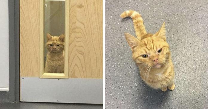 Gato de cara gruñona ha enamorado a todos