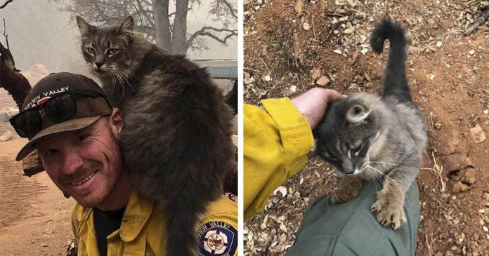 Gato rescatado de incendio no deja solo a su salvador