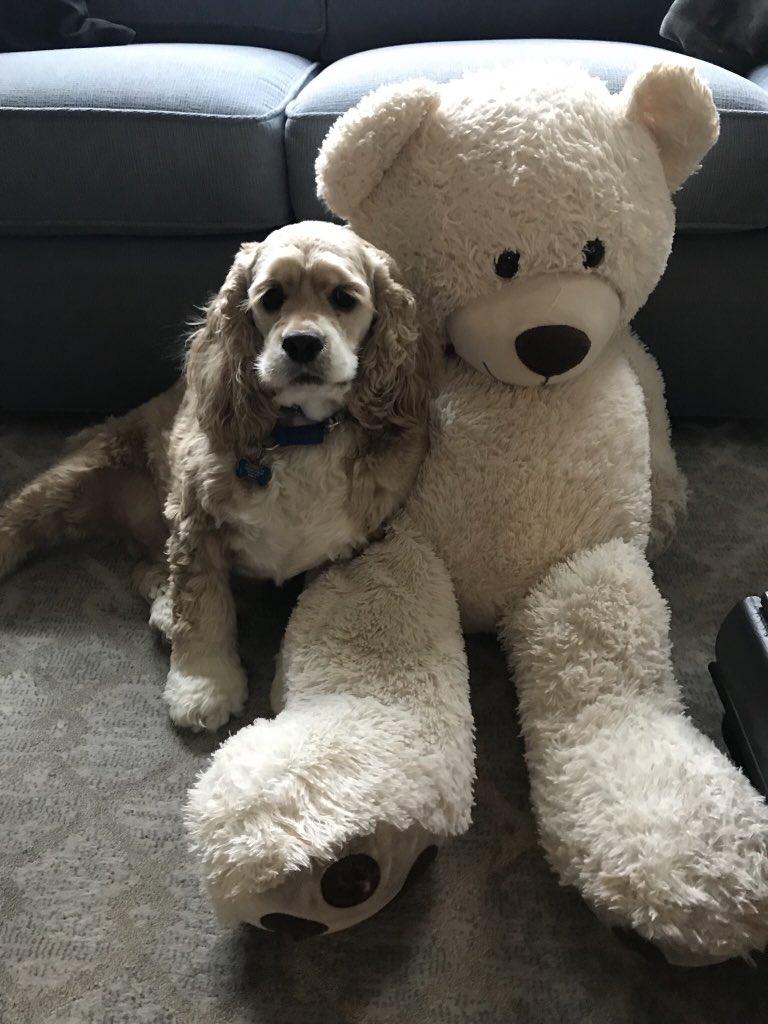 Habs y su oso