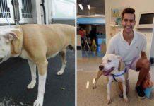 Hombre conduce 200 millas para salvar la vida de un perrito