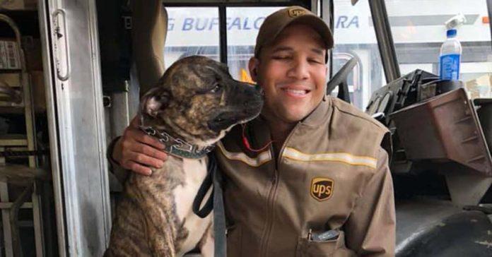 Perrito entra a una furgoneta de UPS y su vida cambia para siempre