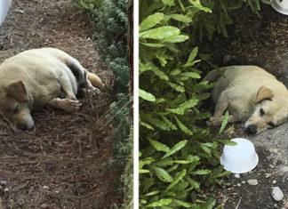 Perro encontrado viviendo sobre la tierra al ser abandonado