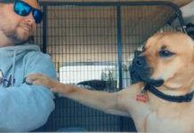 Perro no deja de tocar la mano de su nuevo papa
