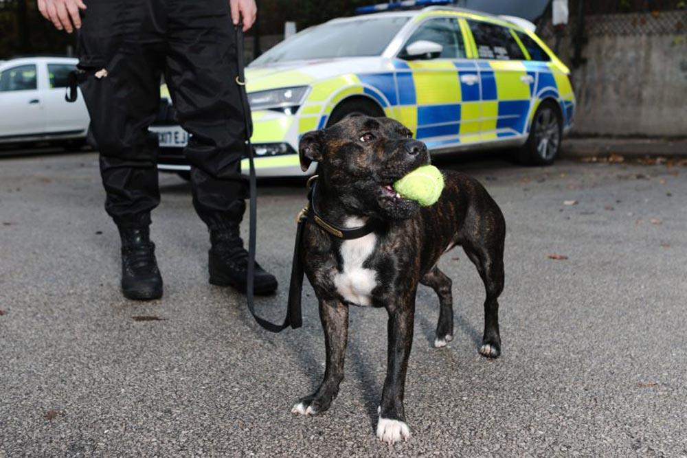 Perro policía en UK