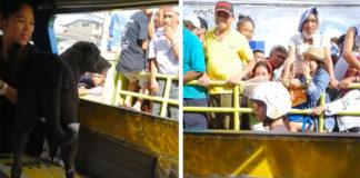 Perro viaja solo en autobús para encontrar a su familia