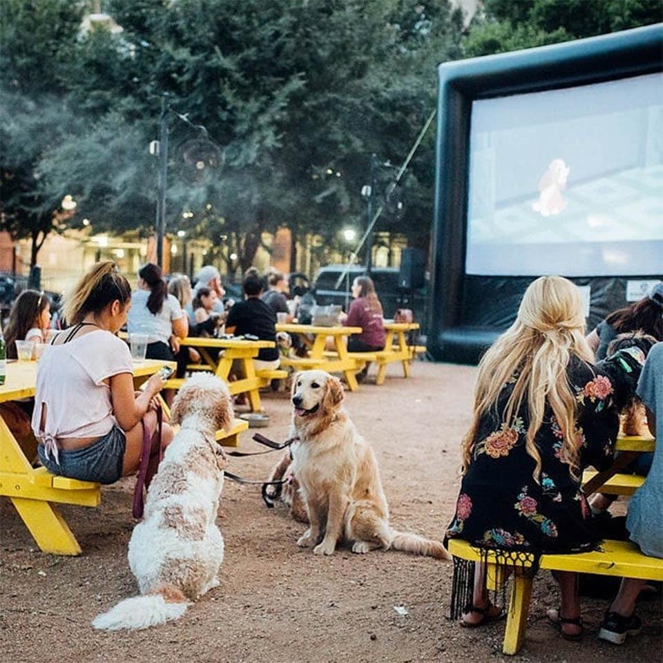 Perros viendo películas