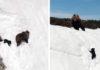 Video viral de un oso bebé trepando una montaña no es lo que parece