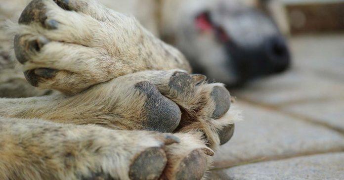 Aprueban iniciativa que permite la matanza de perritos sin hogar