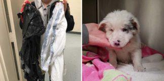 Cachorro fue encontrado en una bolsa de basura que flotaba en un arroyo