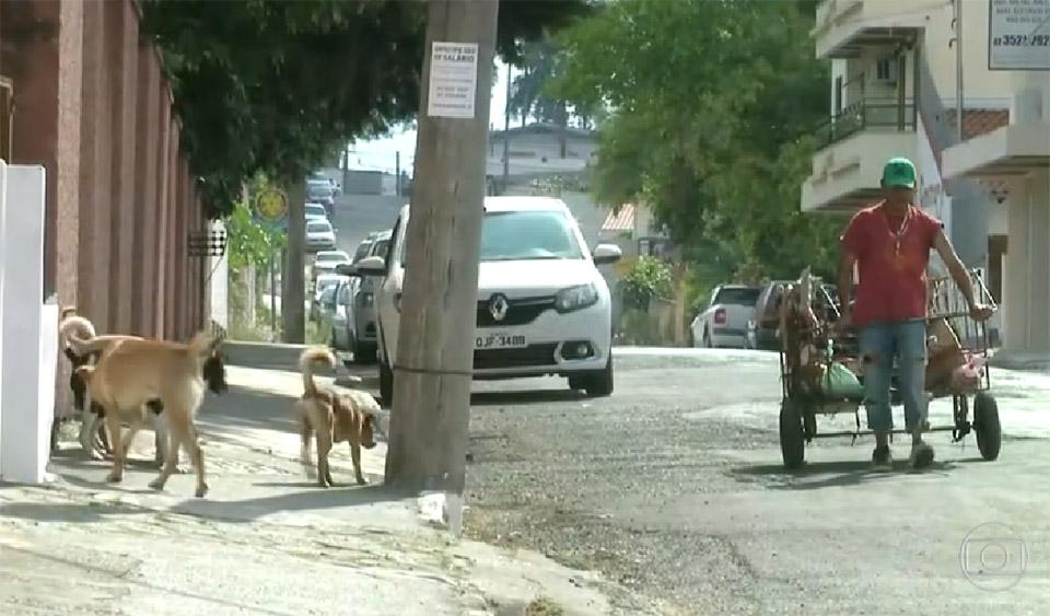Cézar y sus perros