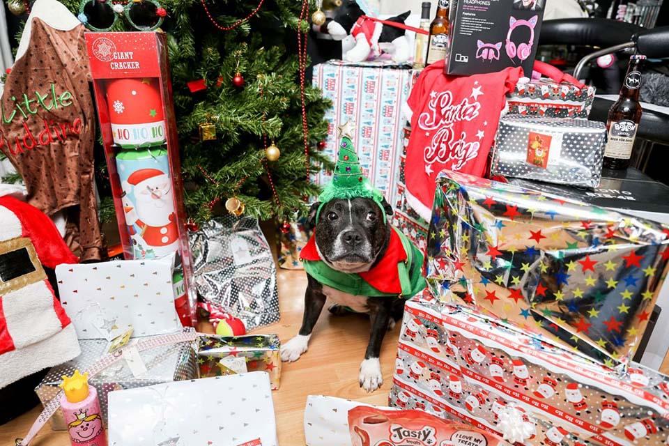 Cleo y sus regalos