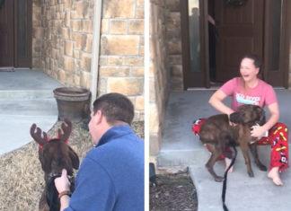 Familia adopta en secreto a su perro favorito del refugio