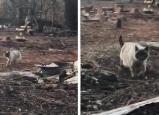 Familia encuentra a su gato después de un incendio forestal
