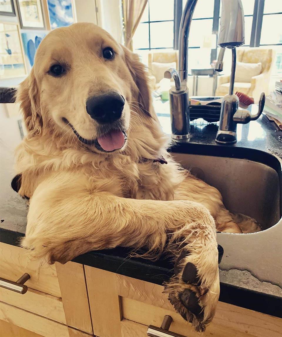 Franklin en el fregadero