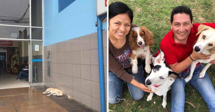 Fue adoptado el perrito que esperaba a su padre que murió en un hospital