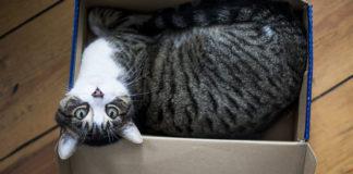 Gato enviado en una caja a más de 700 millas
