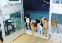Grupo de perros esperan a su dueño en la puerta del hospital