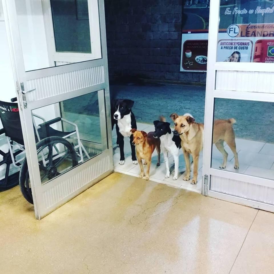 Grupo de perros esperando a su dueño