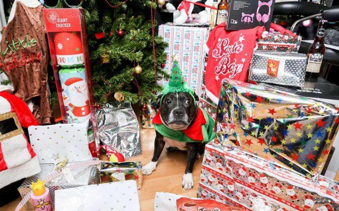Hombre gasta miles en regalos de Navidad para su perro