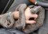 Hombre le brinda una segunda oportunidad a un gatito sin hogar