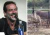 Jeffrey Dean Morgan adopta a pareja de animales inseparables