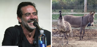 Jeffrey Dean Morgan adopta a pareja de animales inseparables