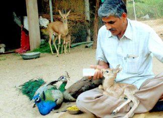 Mecánico de la India ha rescatado mas de 1,180 animales salvajes heridos