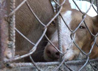 Numerosos perros son maltratados hasta morir en una finca de Murcia
