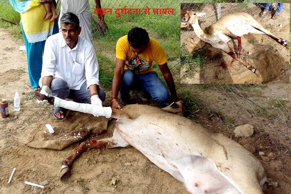 Peera Ram Bishnoi