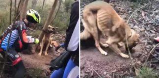 Perrito fue atado a un árbol en un bosque para que muriera de hambre