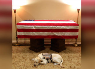 Perro de servicio del presidente Bush lo acompaño hasta el fin