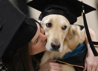 Perro de servicio se gradúa con honores de la Universidad
