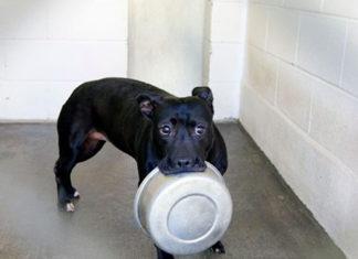 Perro espera 4 años en el refugio