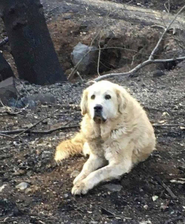 Perro esperó a su familia