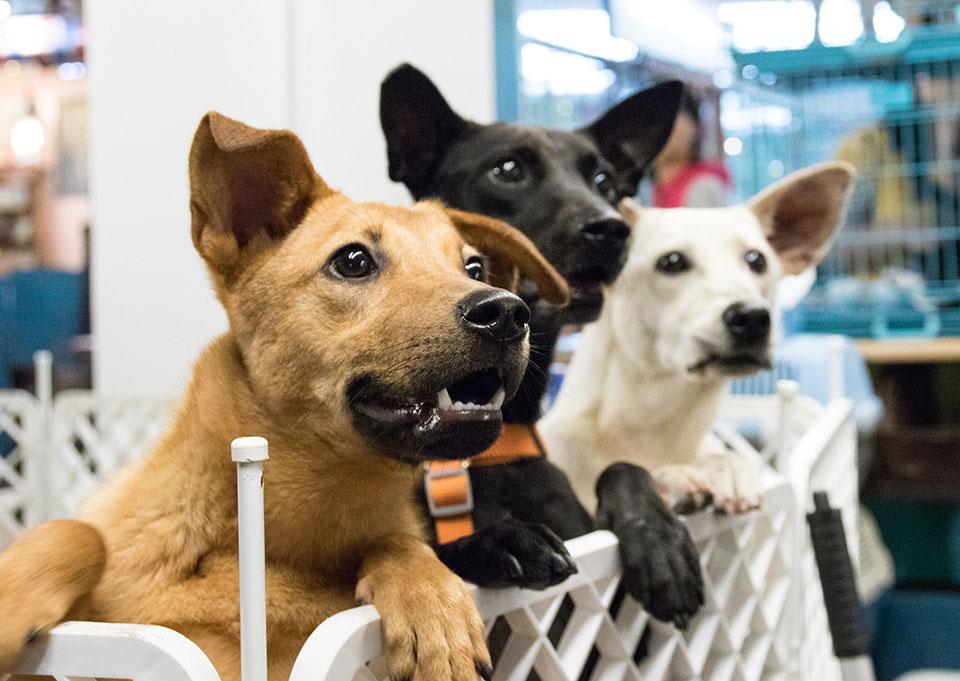 Perros en un refugio