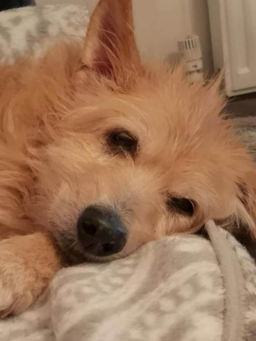 Pincho es un perro muy dulce