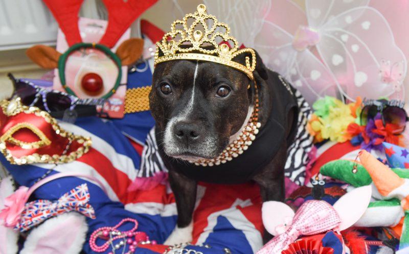Princess Cleo