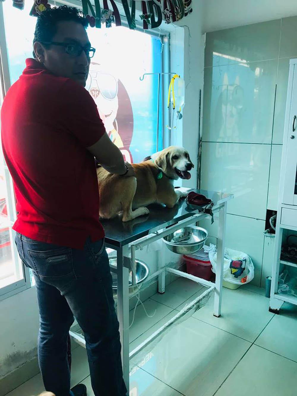 Ramsés en el veterinario