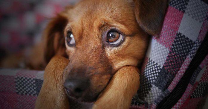 Reino Unido prohíbe la venta de gatos y perros menores de seis meses