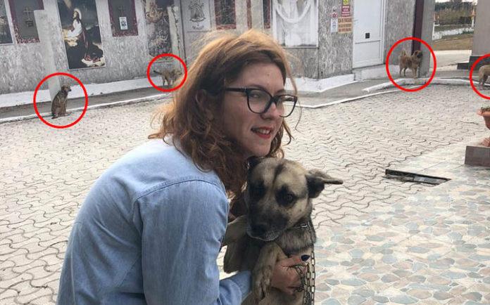 18 perros encadenados fuera de una iglesia en Rumania