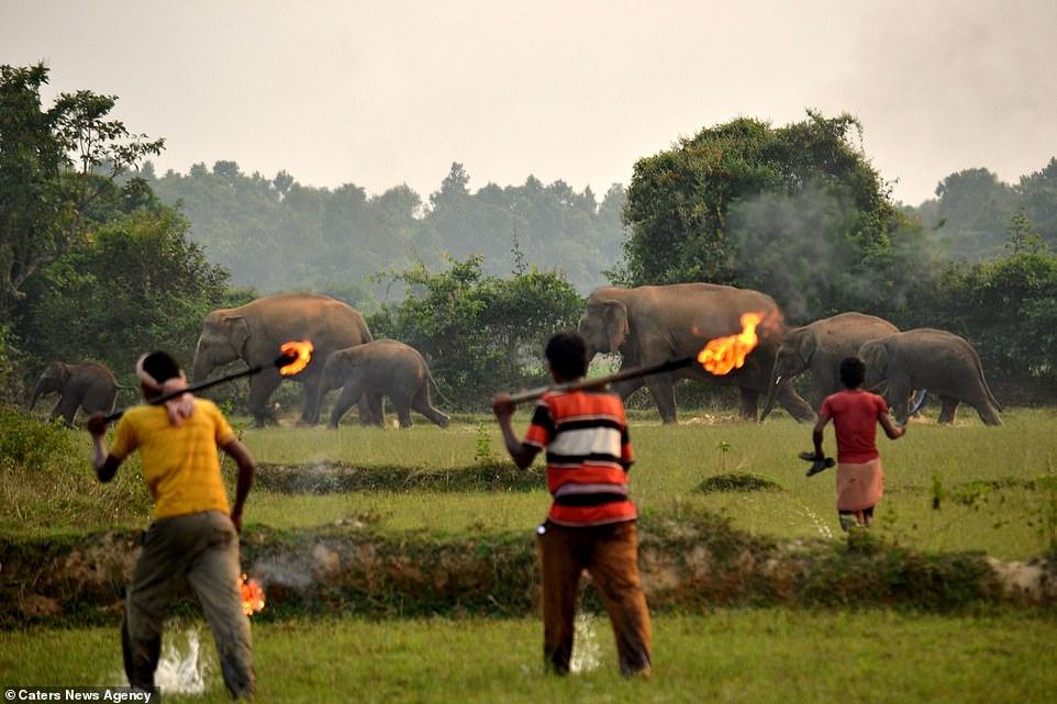 Aldeanos arrojan bombas a elefantes