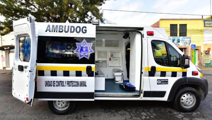 Ambudog una ambulancia para animales sin hogar